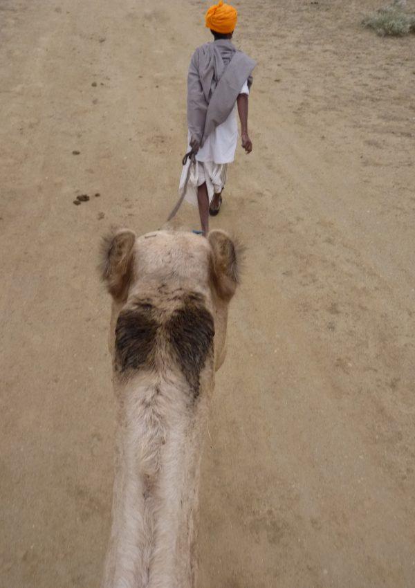 Wüste und Kamele