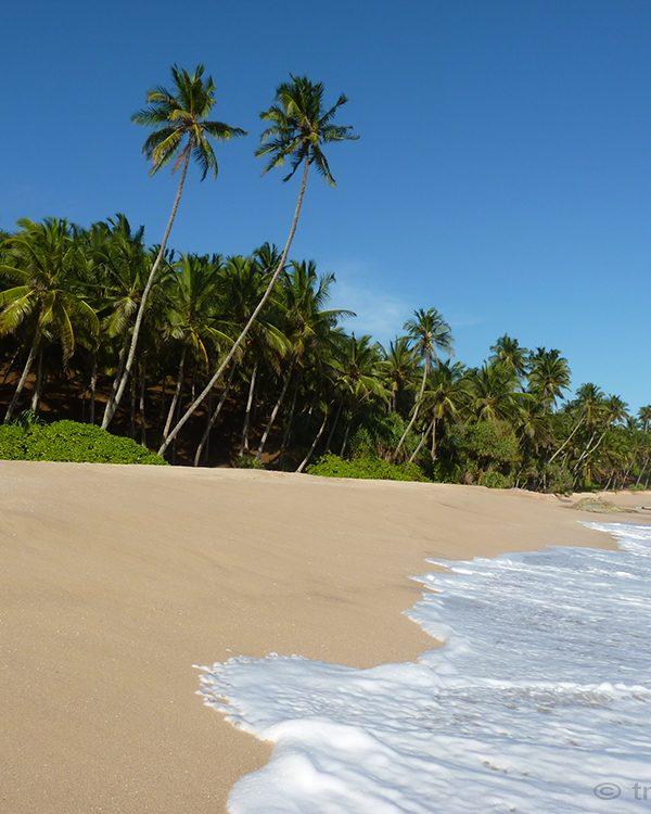 Traumstrand: Sri Lanka