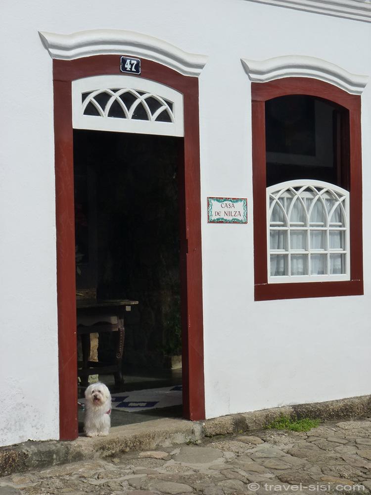 Hund in Paraty