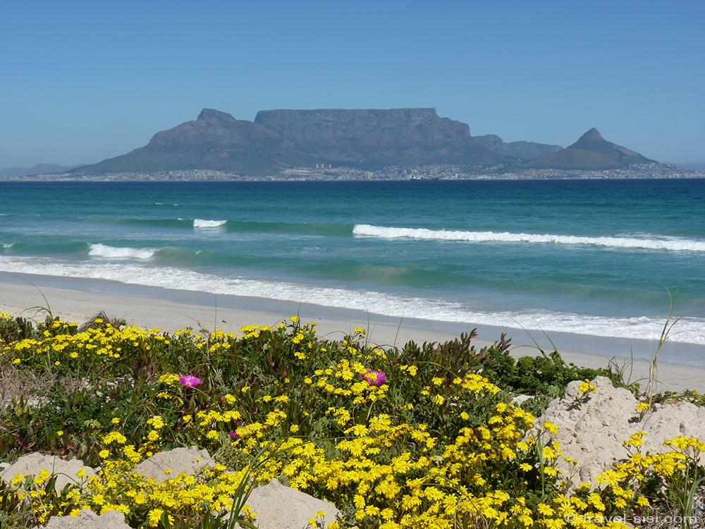 Frühlingsblumen am Traumstrand Kapstadt