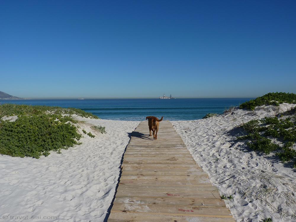 Hund läuft an Traumstrand Kapstadt