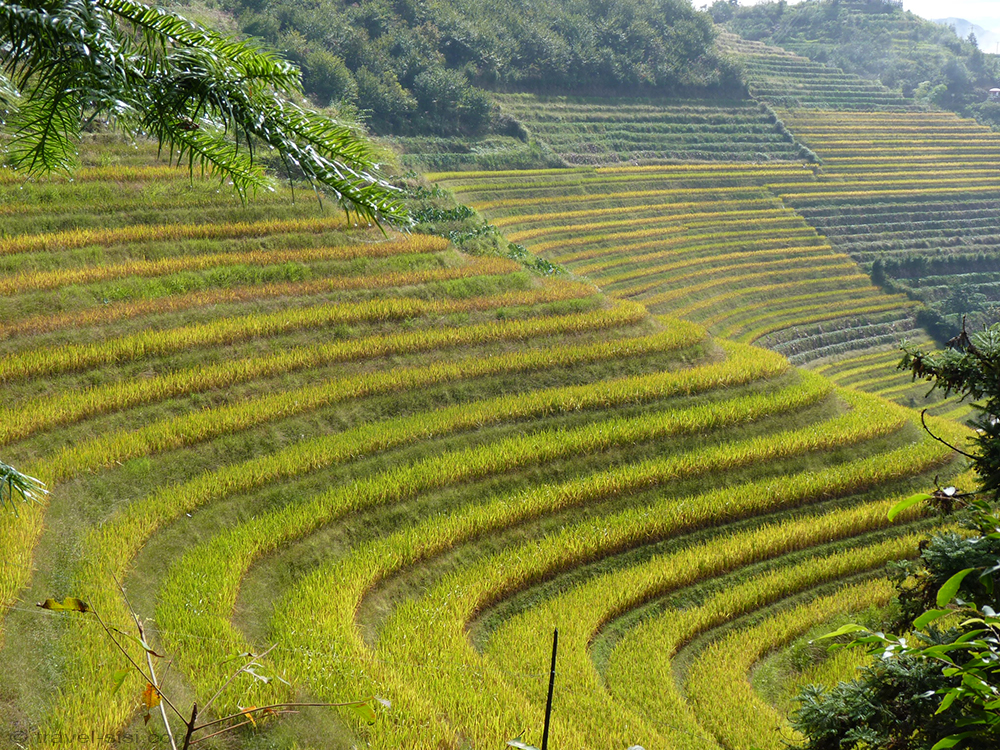 Reisterrassen von Ping'an in China