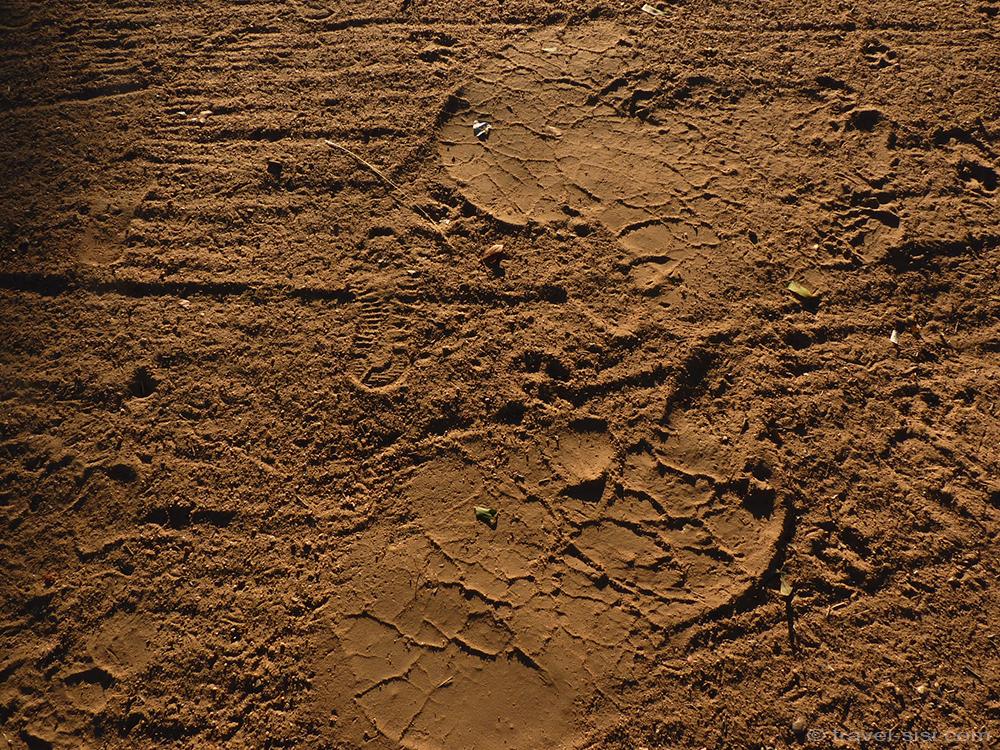 Fussspuren des Elefanten in Namibia