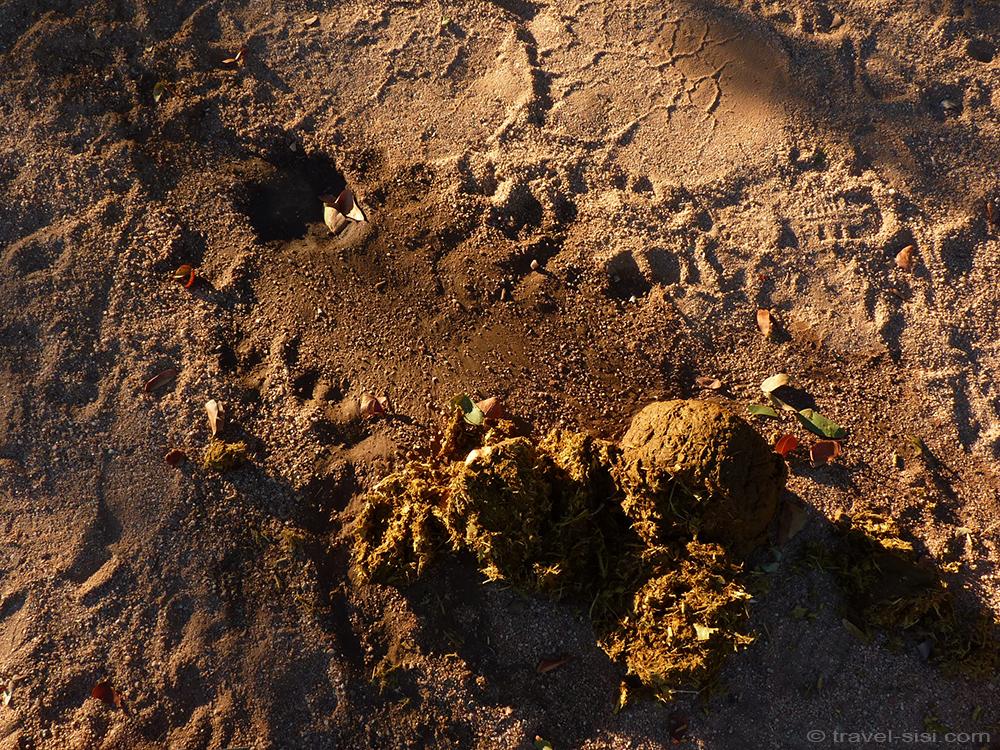 Spuren des wilden Elefanten in Namibia