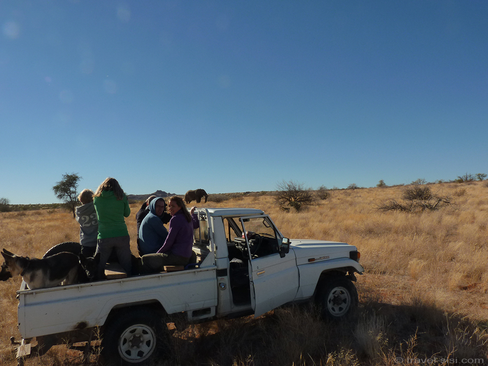Wilder Elefant in Namibia