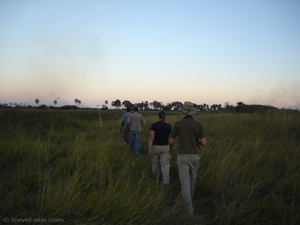 Game Walk im Okavango Delta