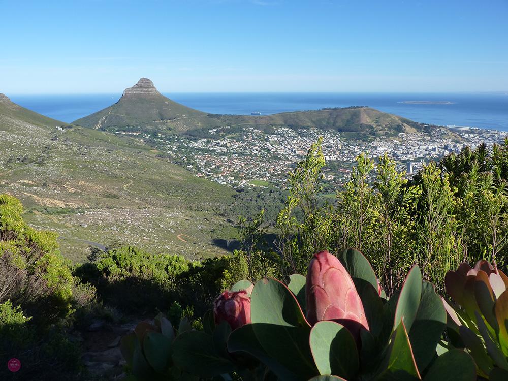Auf dem Weg zum Devils Peak Blick auf Kapstadt