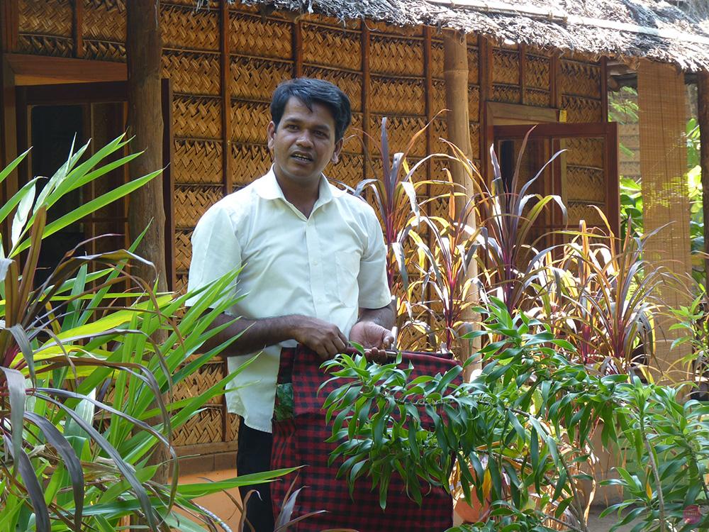 Ayurvedakur Kerala Kräuter pflücken