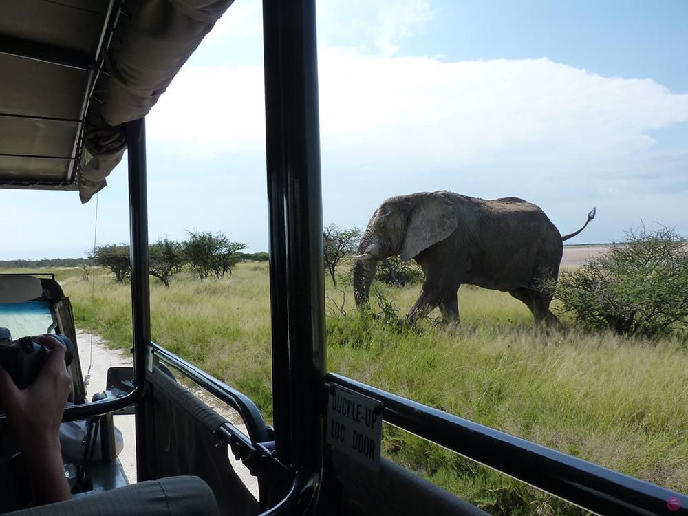Elefant überquert die Strasse im Etosha Nationalpark in Namibia