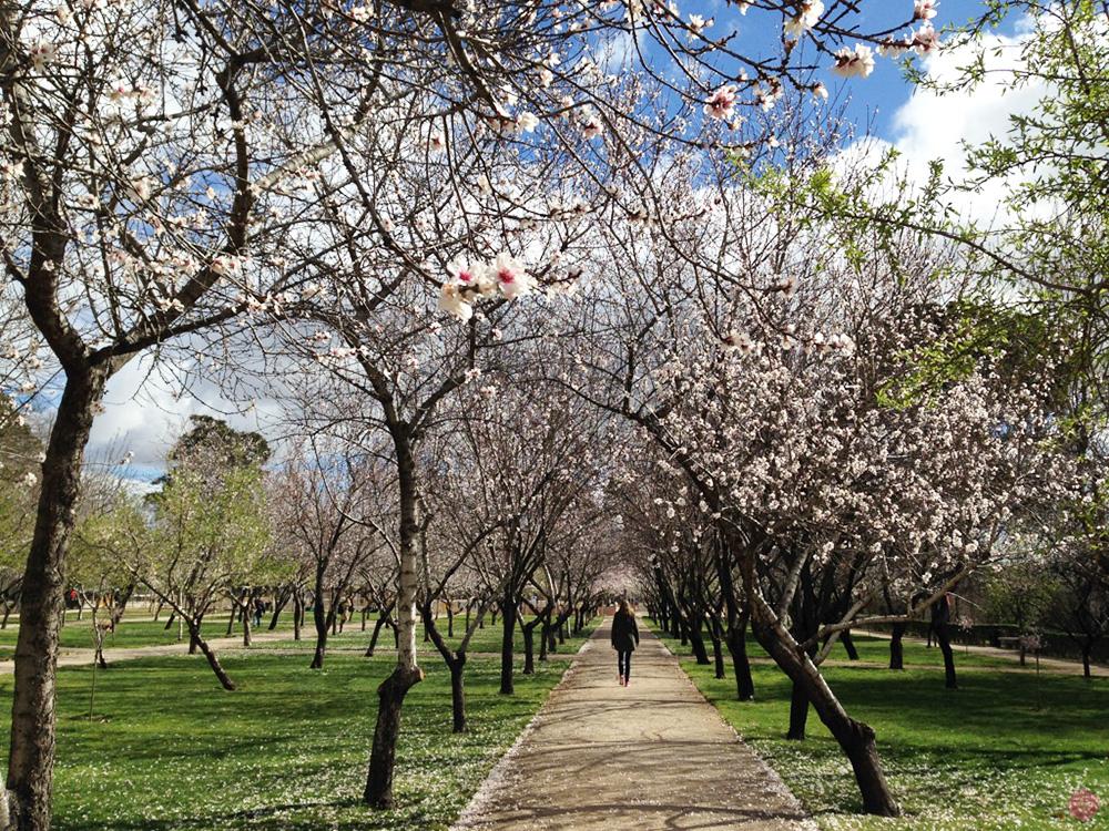 Reisetipps Madrid Frühling im Parque del Buen Retiro