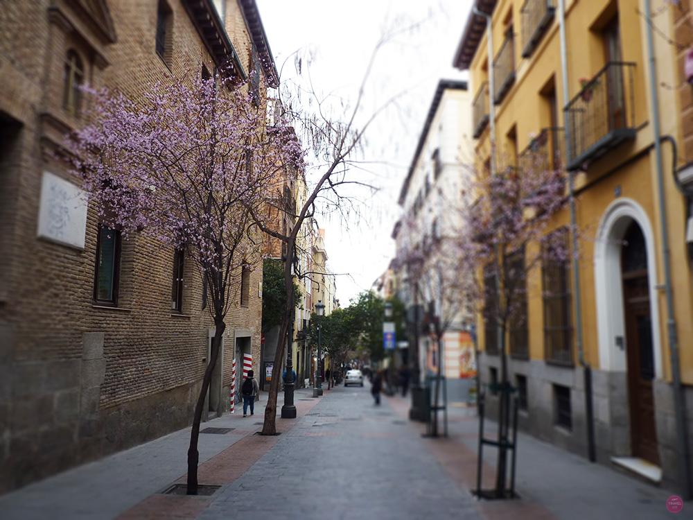 Reisetipps Madrid Strasse mit Frühlingsbaum