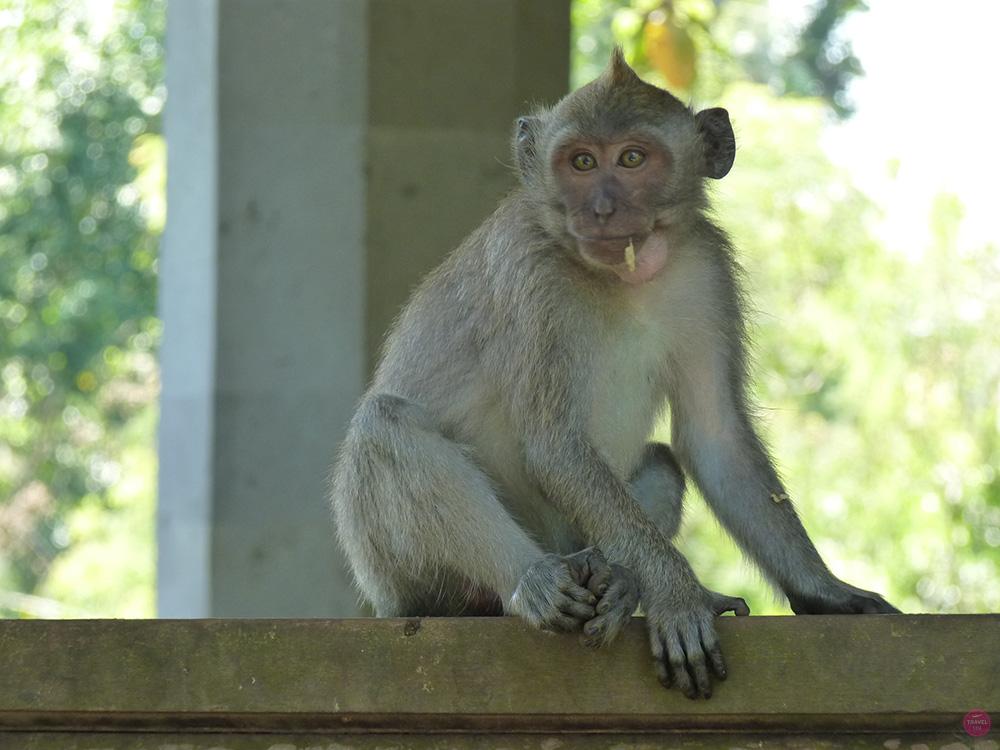 Mit Kleinkind in Bali Monkey Forest Ubud