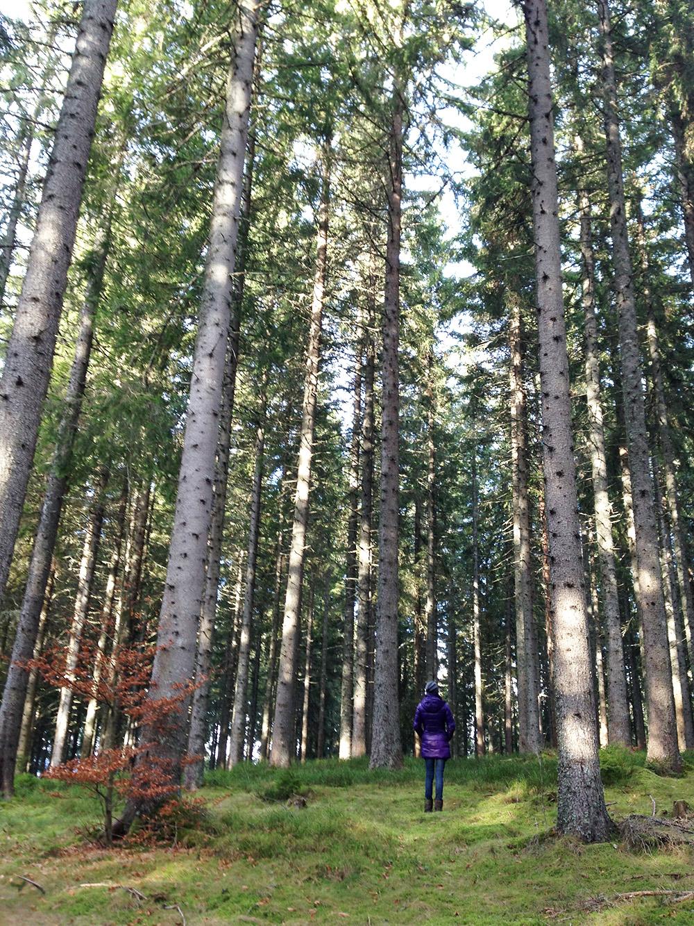 Reisetipps für den Schwarzwald im Winter Travel Sisi beim Windgfällweiher