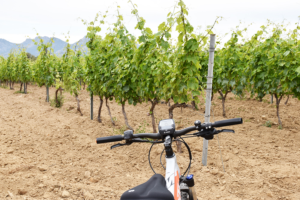 Reisetipps Korsika E-Biketour aufs Weingut Clos Colombu