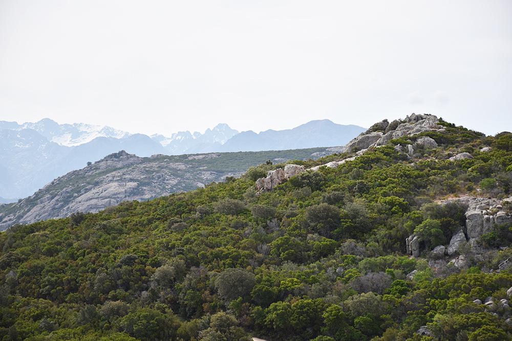 Reisetipps Korsika Sicht auf schneebedeckte Berge von der Madonna de la Serra
