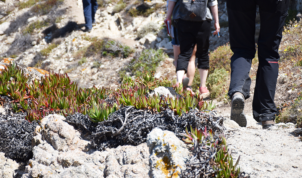 Reisetipps Korsika Wanderwege auf der Halbinsel Revellata