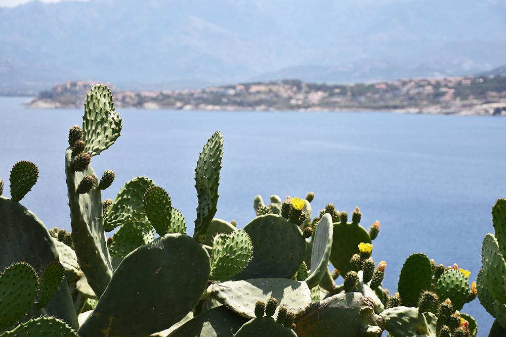 Reisetipps Korsika tolle Pflanzenwelt auf der Halbinsel Revellata