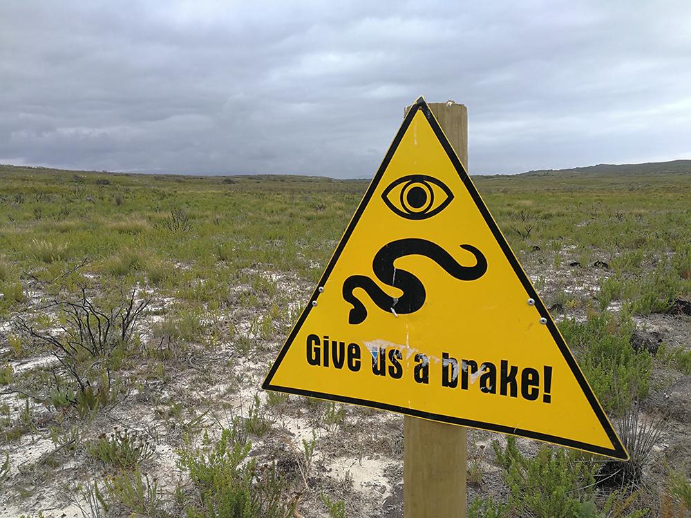 De Hoop Nature Reserve Schlangen