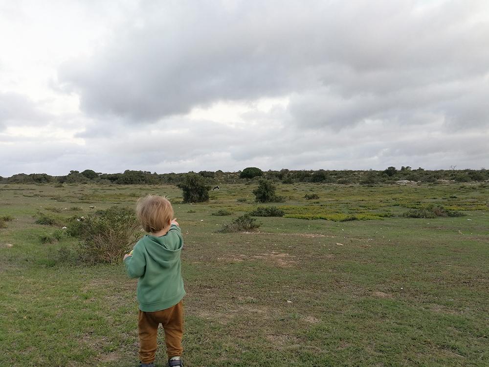 De Hoop Nature Reserve Tierbeobachtung bei der Unterkunft