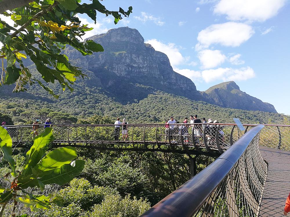 Kapstadt mit Kleinkind Boomslang Treetop Canopy Walk Kirstenbosch