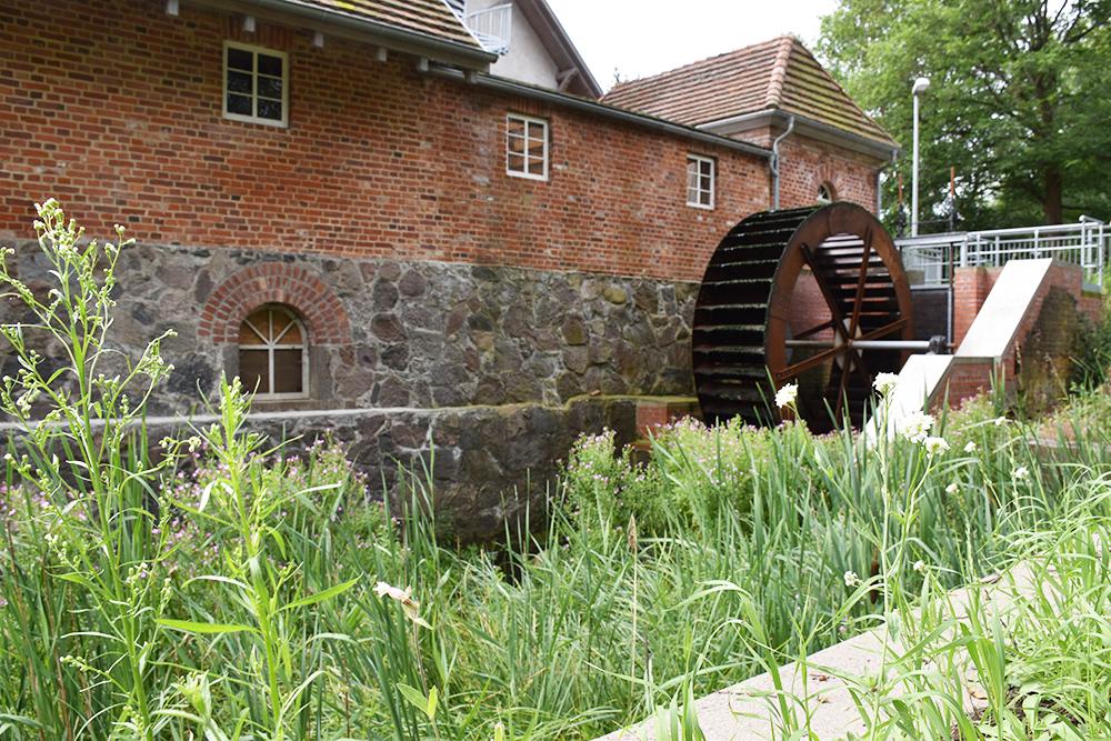 Radtour Müritz Nationalpark Bolter Mühle