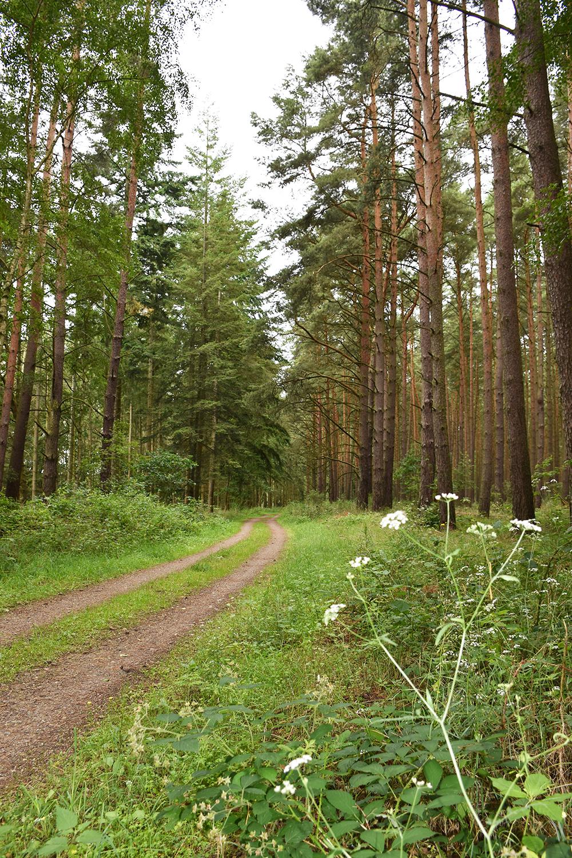 Radtour Müritz Nationalpark wunderbare Waldabschnitte