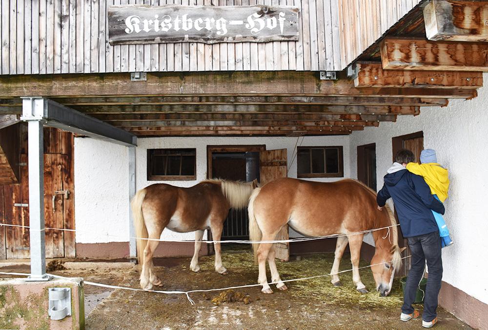 Panoramagasthof Kristberg Pferde