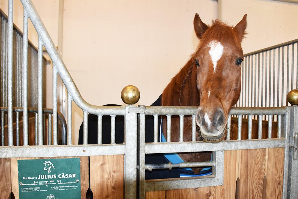 Familotel Landgut Furtherwirt Besuch im Pferdestall