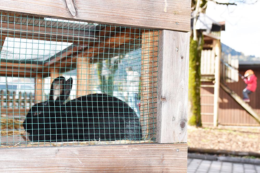 Familotel Landgut Furtherwirt Kaninchen beim Spielplatz