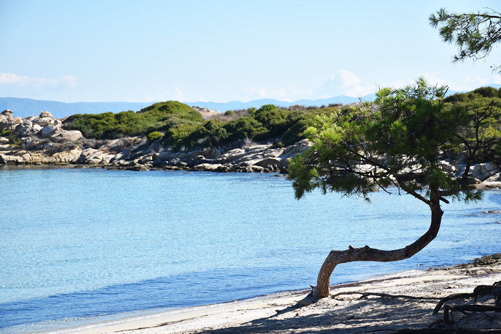Reisetipps Chalkidiki Baum am Karidi Beach