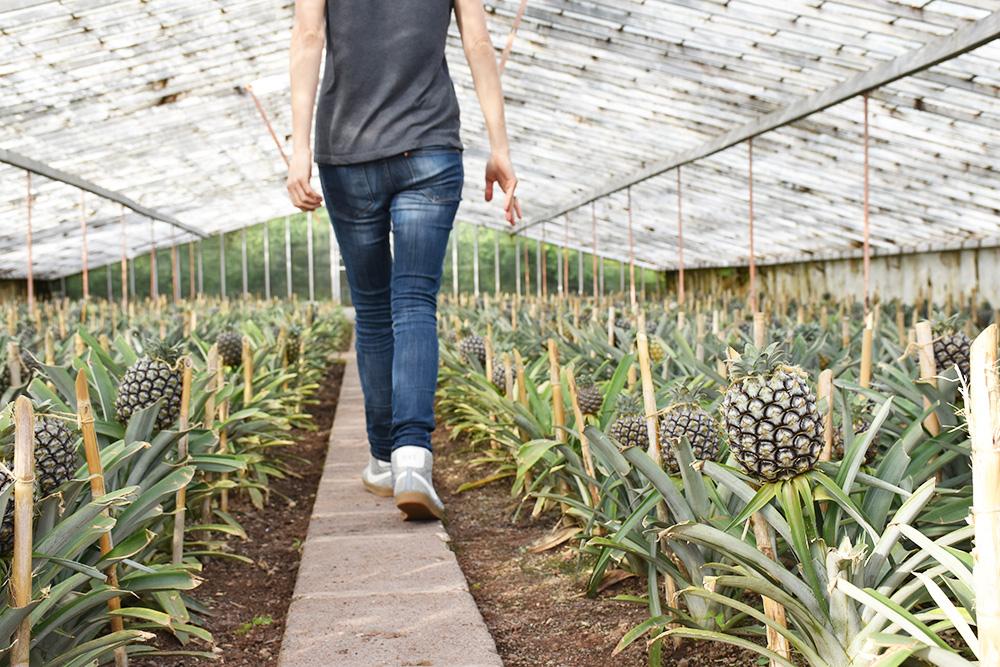 São Miguel Azoren Reisetipps Travel Sisi in den Ananasplantagen Arruda