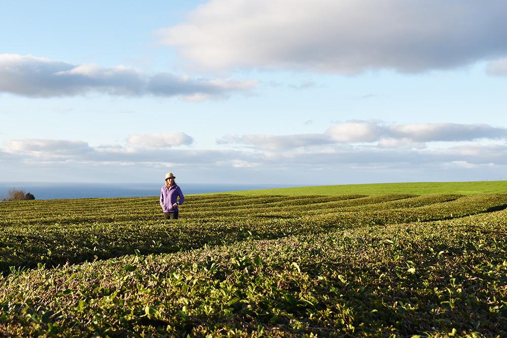 São Miguel Azoren Reisetipps Travel Sisi in der Teeplantage Chà Gorreana