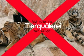 Sag Nein zu Tierquälerei auf Reisen
