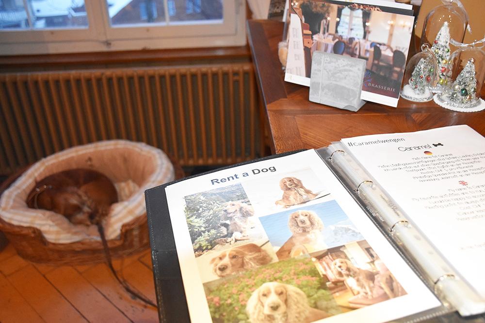 Reisetipps Wengen unterwegs mit Jack Daniel's Hund Caramel im Hotel Regina