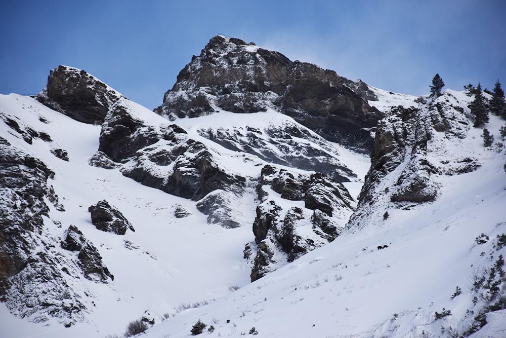 Reisetipps Wengen unterwegs mit Jack Daniel's Steinbocksichtung auf der Winterwanderung