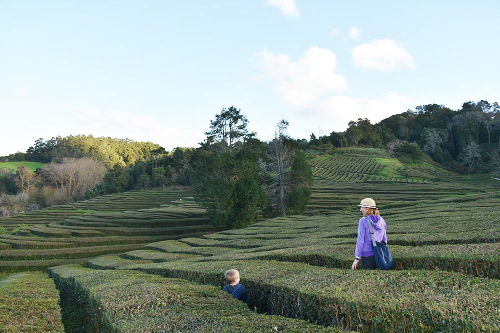 Azoren mit Kleinkind Wanderung durch die Teeplantage Cha Gorreana auf São Miguel