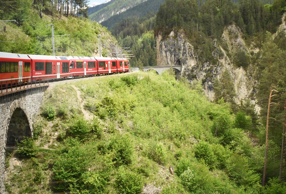 Die Steinböcke in Pontresina Anreise mit der Rhätischen Bahn