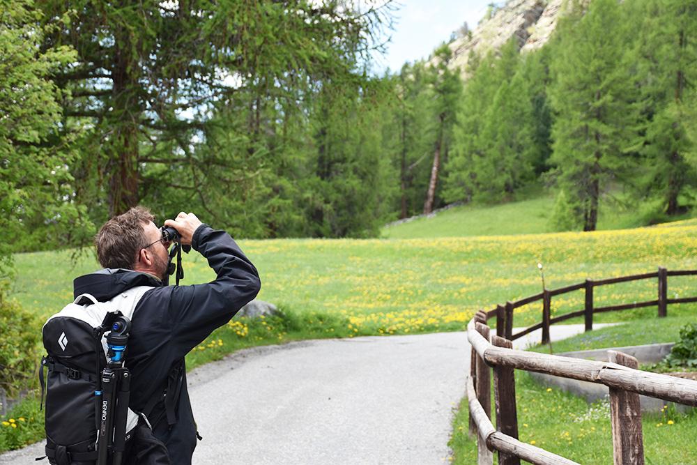 Die Steinböcke in Pontresina Führung zu den Steinböcken mit Guide Ruedi
