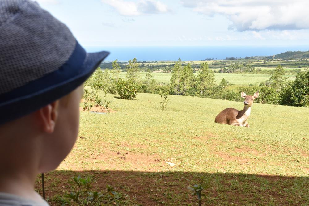 Sehenswürdigkeiten Mauritius meine 10 Highlights Rehe auf der Teefarm Bois Cheri