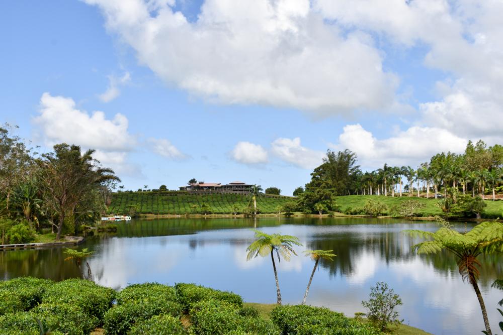 Sehenswürdigkeiten Mauritius meine 10 Highlights Teefarm Bois Cheri