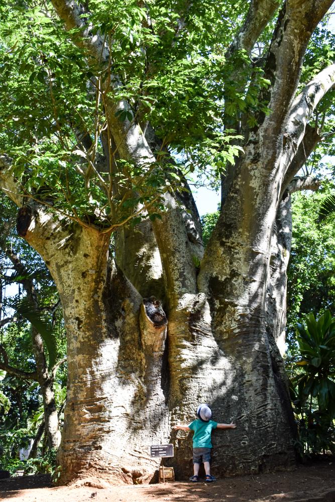 Sehenswürdigkeiten Mauritius meine 10 Highlights kleiner Globetrotter im Botanischen Garten