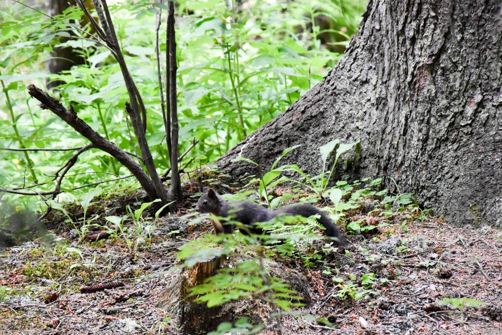 Familienwochenende in der Lenzerheide Sternennacht Eichhörnchenwald