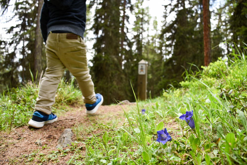 Guarda und der Schellen-Ursli-Weg Enzian