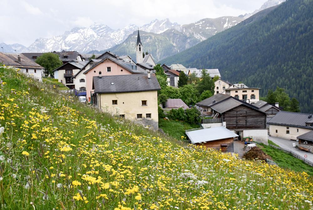 Guarda und der Schellen-Ursli-Weg Guarda mitten in der Blumenwiese