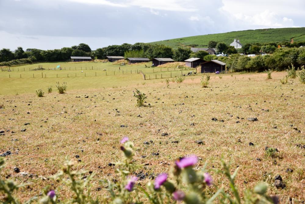 Glamping Gower Peninsula Wiesenbett Hillside Farm-Blick auf die Zelte