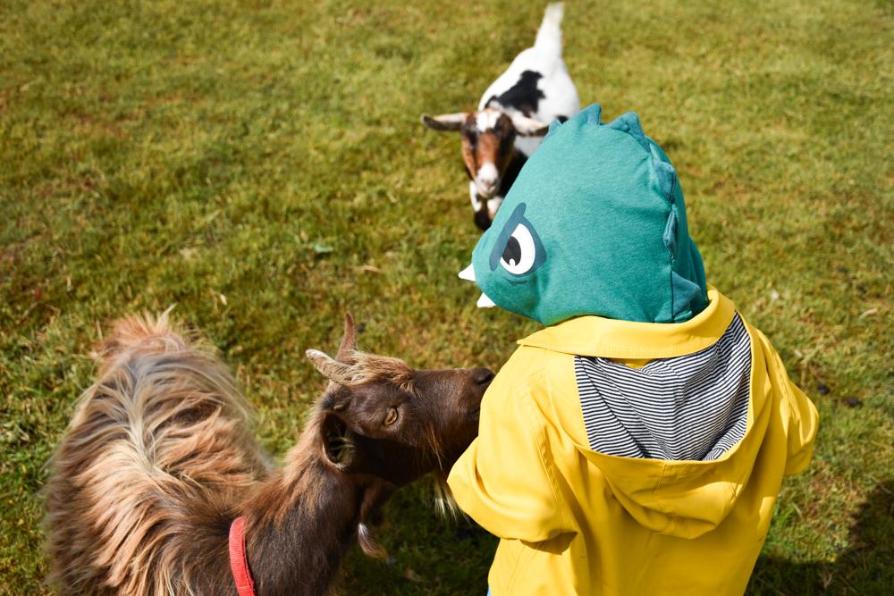 Glamping Gower Peninsula Wiesenbett Hillside Farm Ziegen streicheln