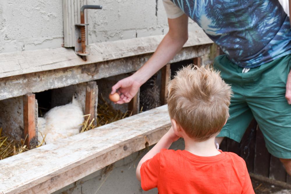 Glamping Gower Peninsula Wiesenbett Hillside Farm frische Eier holen bei den Hühnern