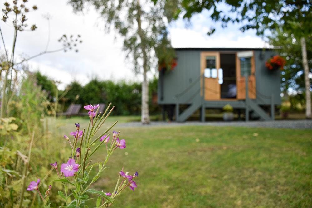 Glamping Welshpool Powys Wales Shepherds Hut mit Blume