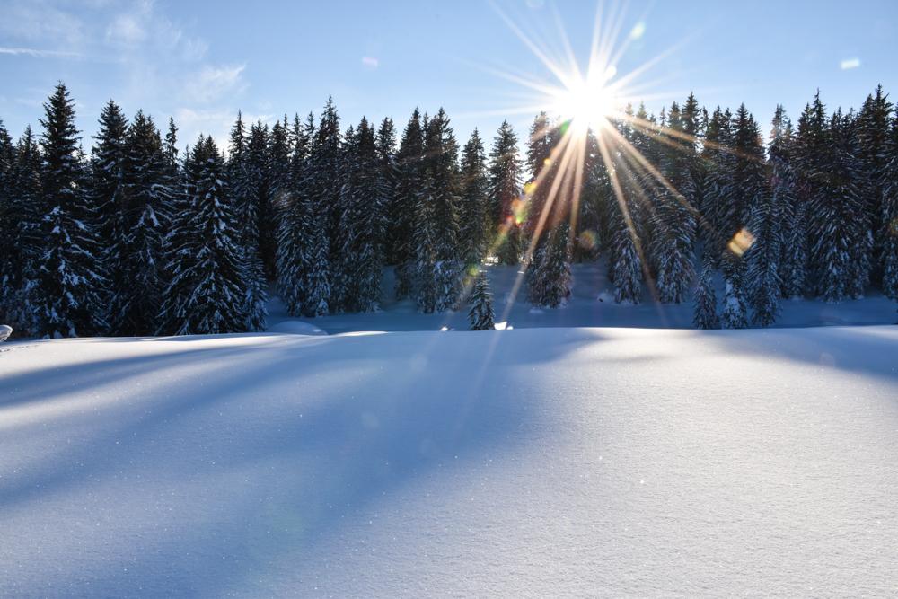Schlittelweg Pany Prättigau Schweiz herrliche Winterlandschaft auf dem Schlittelweg