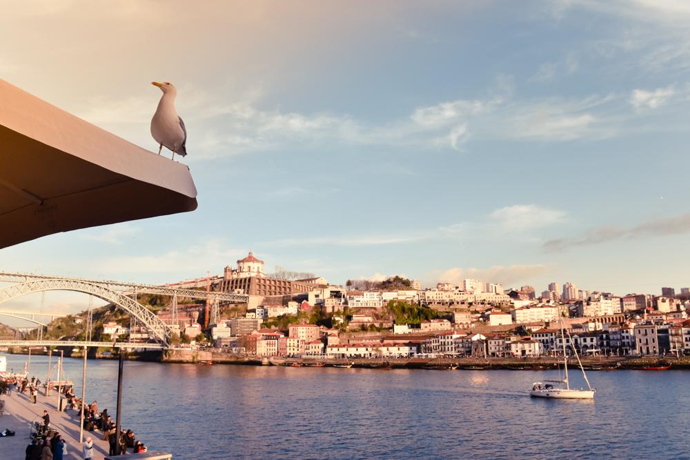 Porto Reisetipps Sehenswürdigkeiten Restaurants Möwe am Cais da Ribeira